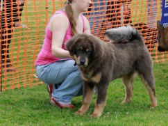 Beth's Charity Dog Show